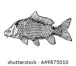 Carp Fish Engraving Vector...