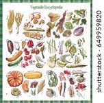 vegetable encyclopedia   all... | Shutterstock . vector #649959820