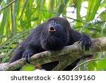black or guatemalan howler... | Shutterstock . vector #650139160