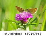 Two Brown Butterflies Stop To...