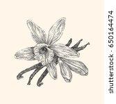 vanilla. vintage style. vector... | Shutterstock .eps vector #650164474