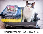 cat sitting in the suitcase or... | Shutterstock . vector #650167513