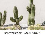 Cactus Flower Wall Background