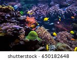 wonderful and beautiful... | Shutterstock . vector #650182648