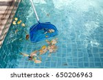 Cleaning Swimming Pool Of...