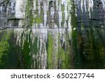 Small photo of Organic texture of green algae and water stains on a concrete wall, industrial background image