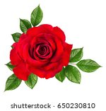 rose isolated on the white... | Shutterstock . vector #650230810