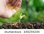 agriculture   hand pouring... | Shutterstock . vector #650254234
