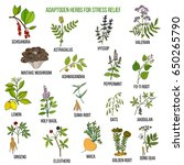 best adaptogen herbs for stress ... | Shutterstock .eps vector #650265790