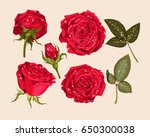 Stock vector set of red rose 650300038