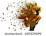 Small photo of Iris Disintegration effect , explosion, pieces in the wind.