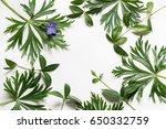 green leaves on white... | Shutterstock . vector #650332759