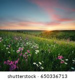 Flowers On The Mountain Field...