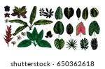 tropical leaves collection.... | Shutterstock .eps vector #650362618