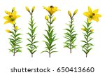 yellow lilies with green stem... | Shutterstock .eps vector #650413660