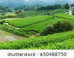 tea plantation | Shutterstock . vector #650488750