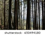 walking the pacific northwest... | Shutterstock . vector #650494180