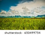 the largest grassland is... | Shutterstock . vector #650499754