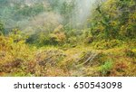 beautiful scenery of takachiho...   Shutterstock . vector #650543098