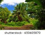 Lush Tropical Vegetation Of Th...