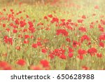 field of red poppies in the... | Shutterstock . vector #650628988