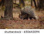 porcupine in the nature habitat.... | Shutterstock . vector #650643094