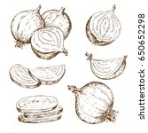 vintage onion. hand drawn... | Shutterstock .eps vector #650652298