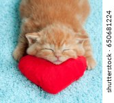 Stock photo little kitten sleeping on the red heart shaped pillow 650681224