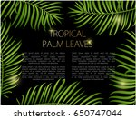 palm leaf vector background.... | Shutterstock .eps vector #650747044