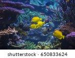 underwater scene. underwater... | Shutterstock . vector #650833624