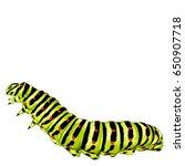 green caterpillar creeps ... | Shutterstock .eps vector #650907718