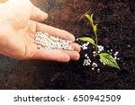 hand of a farmer giving... | Shutterstock . vector #650942509