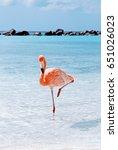 Amazing Pink Flamingo  Aruba...
