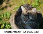 an outdoor cat | Shutterstock . vector #651037630