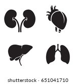liver  heart  kidney  lungs.... | Shutterstock .eps vector #651041710