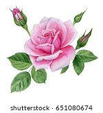 watercolor illustration of rose ... | Shutterstock . vector #651080674