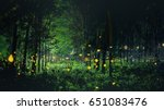 Firefly Flying In The Forest