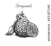 hand drawn ink illustration of...   Shutterstock . vector #651107140