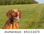 electric collar for dog.... | Shutterstock . vector #651111673