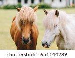 Stock photo horse profile horse portrait 651144289