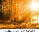 autumn in beech forest.... | Shutterstock . vector #651165688