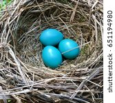 nest of red robin birds with...   Shutterstock . vector #651194980
