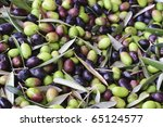 Olive harvest - stock photo