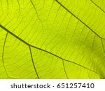close up of  plant leaf  for ... | Shutterstock . vector #651257410