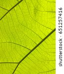 close up of  plant leaf  for ... | Shutterstock . vector #651257416