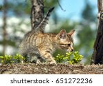 Stock photo striped cat in forest 651272236