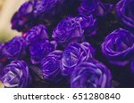 Dark Violet Rose  Purple Dark...