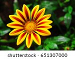 Yellow Flower Like Sunny On...