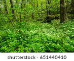 wild flowers blooming at the... | Shutterstock . vector #651440410