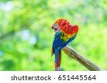 macaw parrot  | Shutterstock . vector #651445564